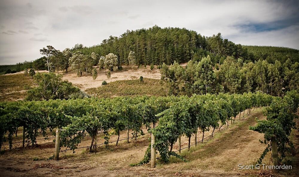 Vines by Scott G Trenorden