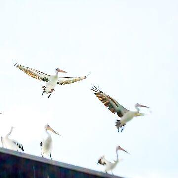 Pelicans in flight by halans