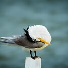 Taking Terns.... by Tracie Louise