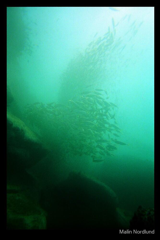 Underwater Wonder by Malin Nordlund