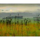 Yarra Valley by Aaron .