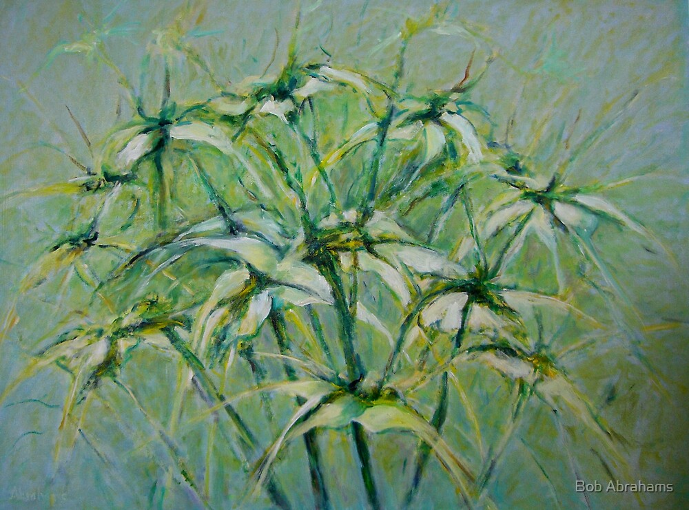 SPIDER LILLIES by Bob Abrahams