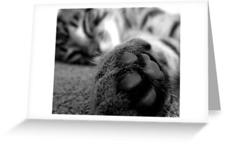 Cat paw by Bailey Designs
