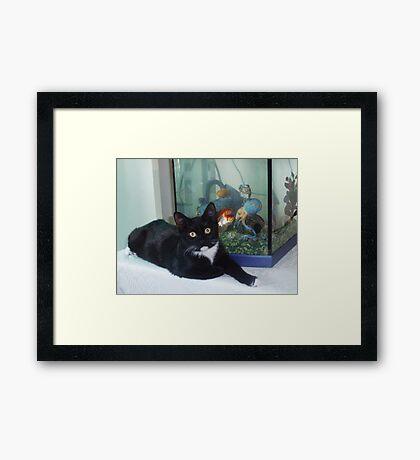 Miss Innocent Framed Print