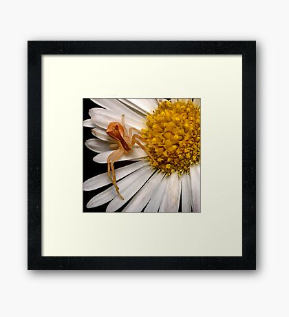 Crab Spider Framed Print