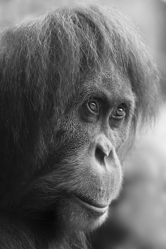 Orangutan by Natalie Manuel
