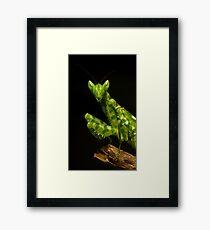 Flower Mantis Beauty Shot Framed Print
