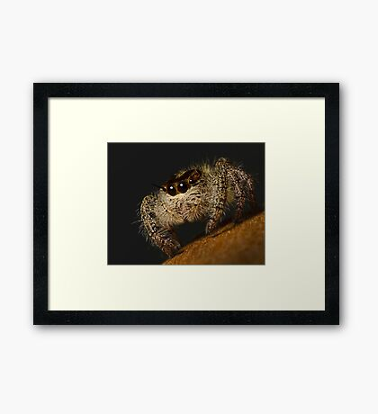 Woolly Predator Framed Print