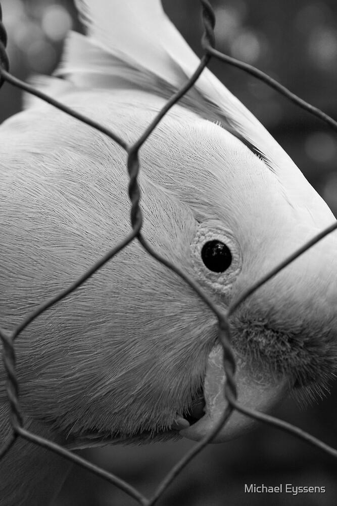 Let Me Out! (Black & White) by Michael Eyssens