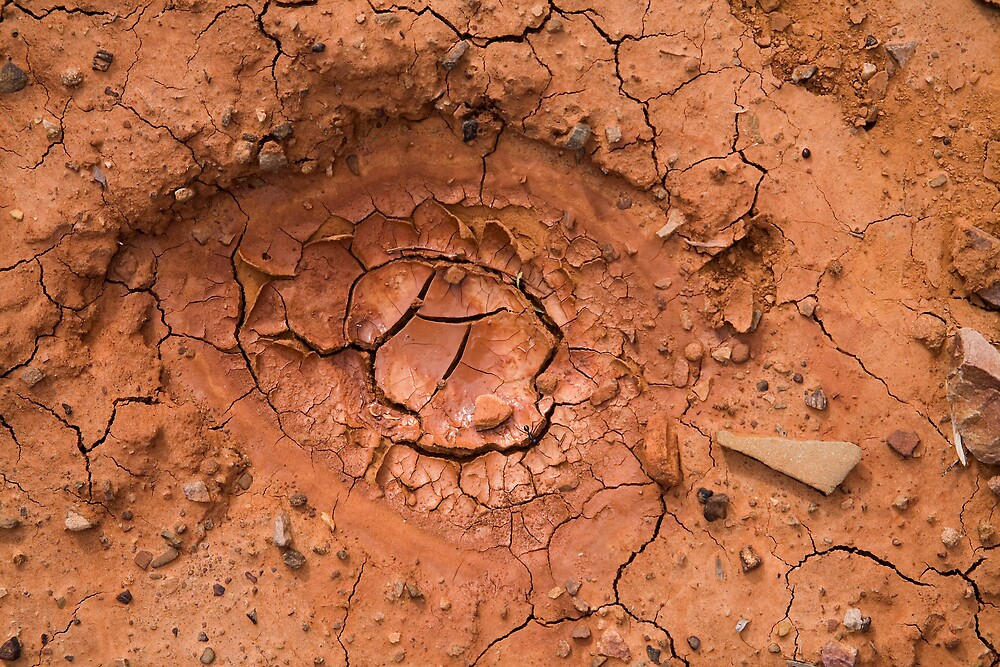 Eye in the mud by Thomas Kress