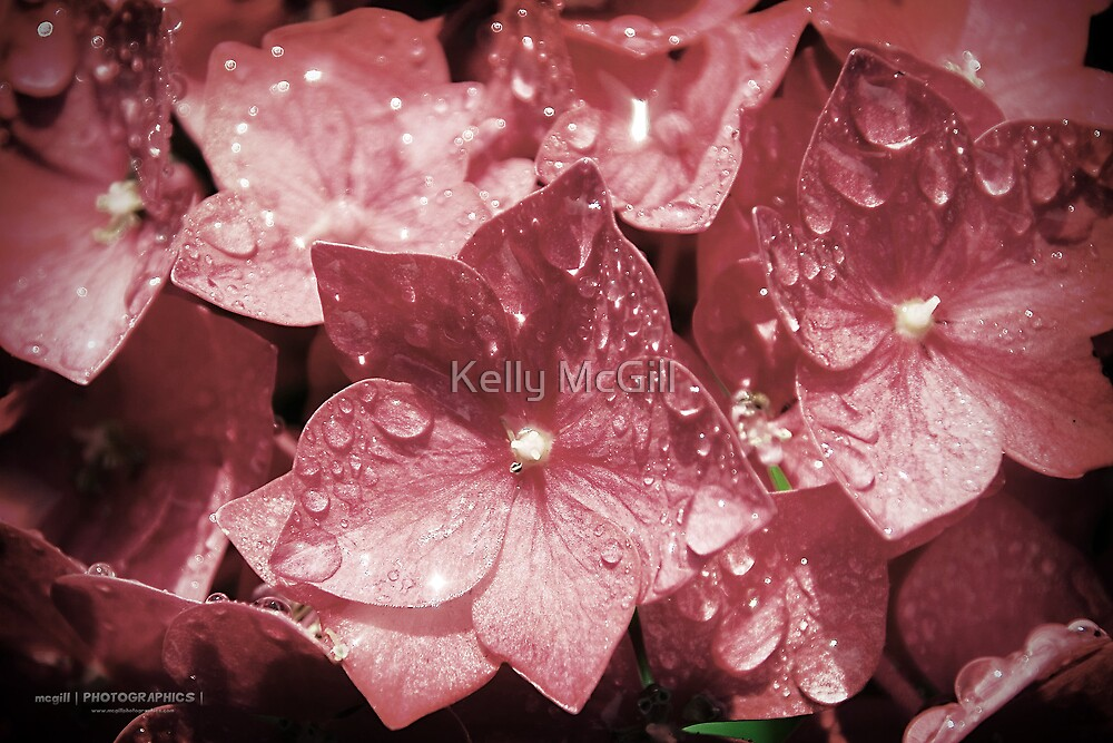 Drops of Flower by Kelly McGill