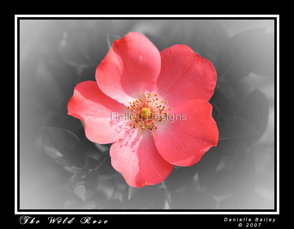 The Wild Rose by Bailey Designs