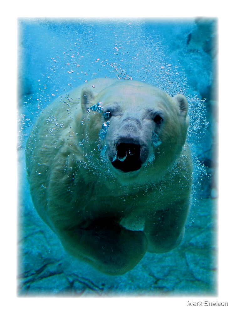 Polar Bear Dive T-Shirt by Snelvis