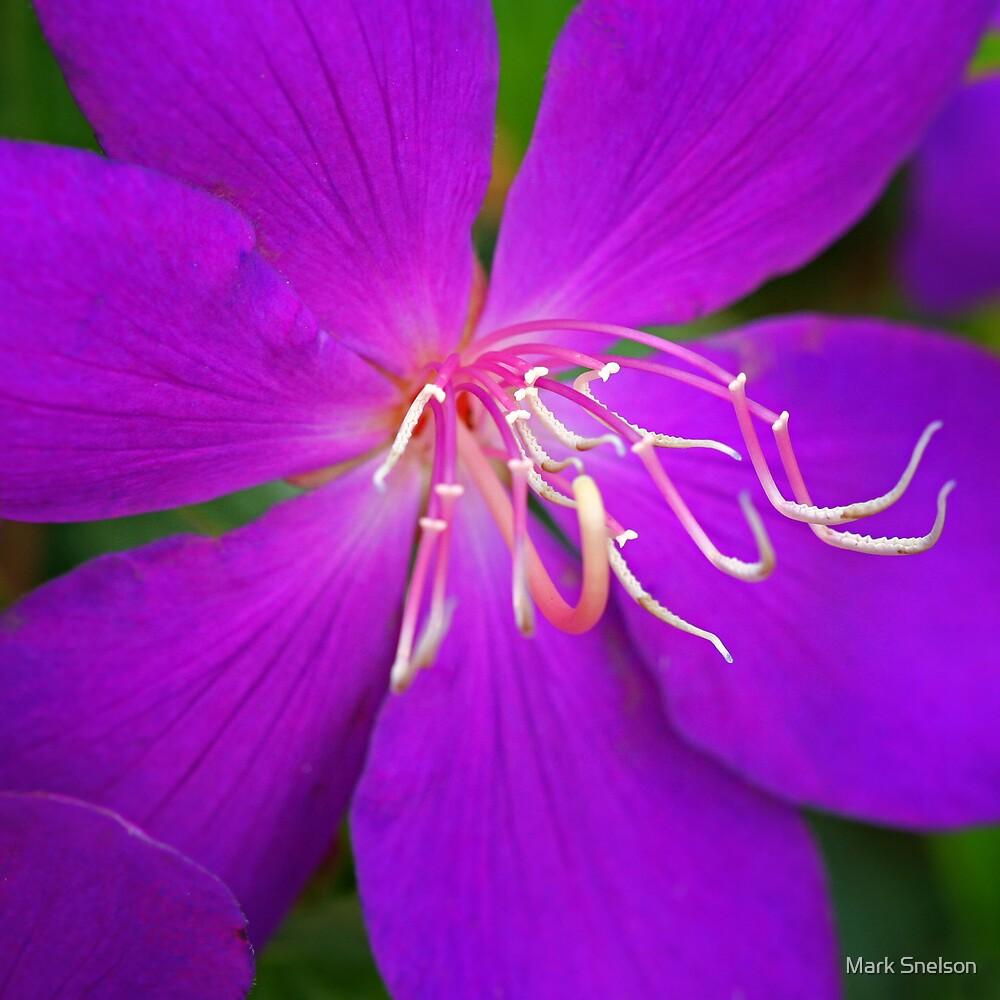 Purple Flower 2 by Mark Snelson