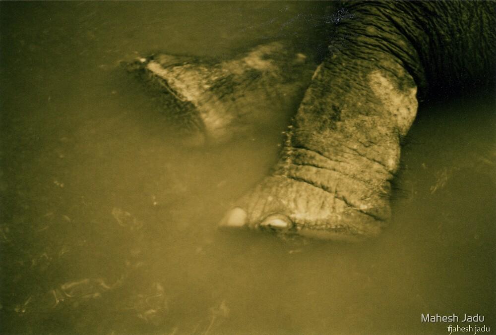 elephoot by Mahesh Jadu