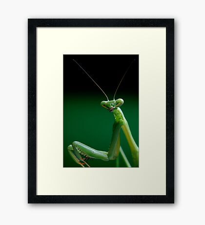 False Garden Mantis Framed Print