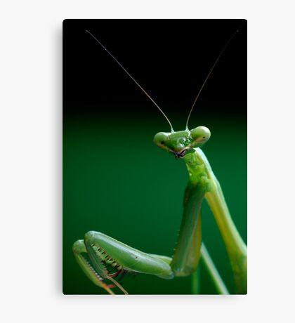 False Garden Mantis Canvas Print