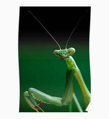 False Garden Mantis Poster