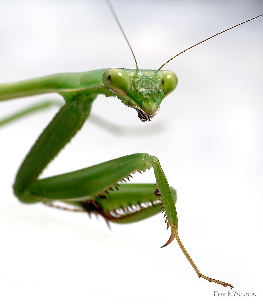 False Garden Mantis 2 by Frank Yuwono