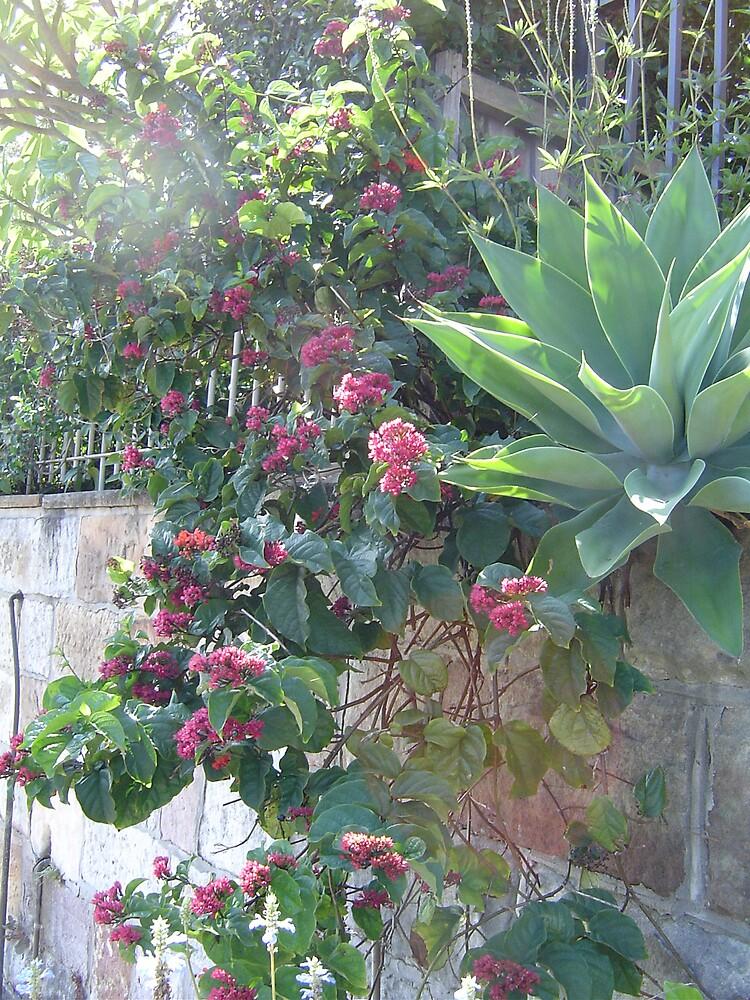 Hanging garden by judy