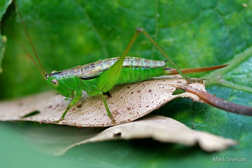 Grasshopper 19 by Mark Snelson