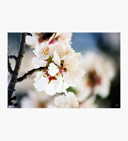 Flowering Almond and Friend Photographic Print