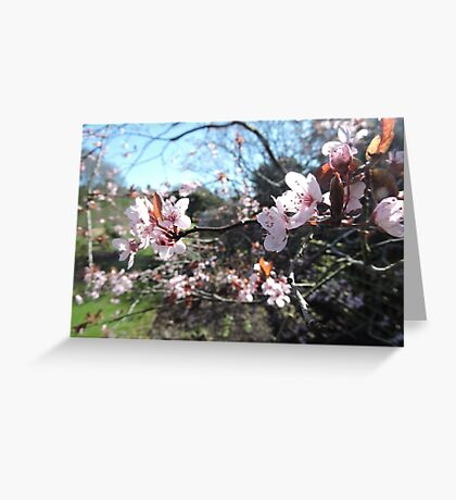 Every Heart Has A Story To Tell (Blossom) Greeting Card
