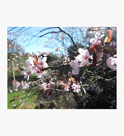 Every Heart Has A Story To Tell (Blossom) Photographic Print