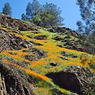 Poppy Slope along the Hite's Cove Trail by everpresent