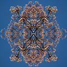 Blossom Burst #4 by John Hill-Daniel