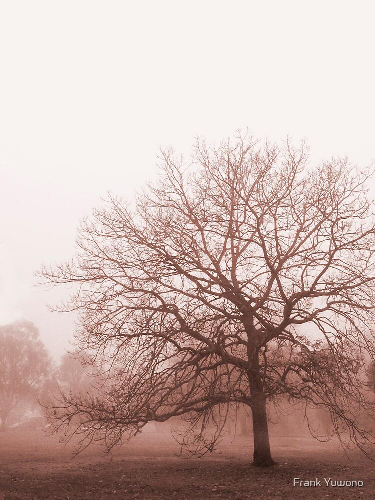 Hazy Morning by Frank Yuwono