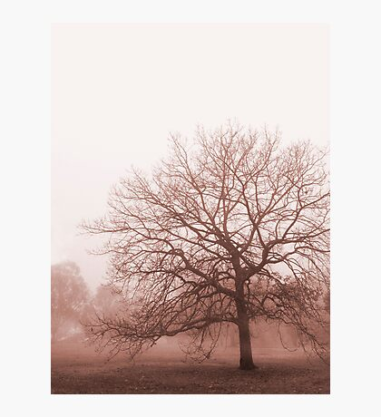 Hazy Morning Photographic Print