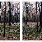 four square forest by Devan Foster