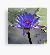 Water Lillie - Blue Canvas Print