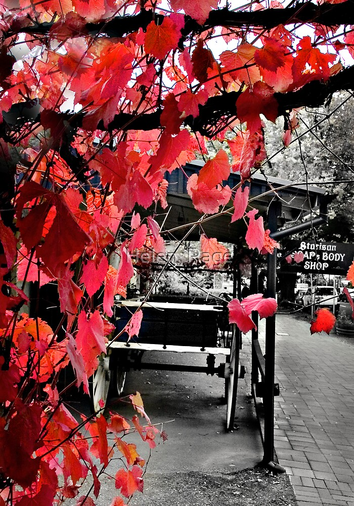 Hahndorf South Australia by Helen  Page