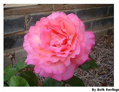 geek in the pink by elizabethrose05