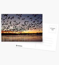 First Flight at Bosque del Apache Postcards