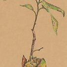 Avocado Sprout by Claire Robinson