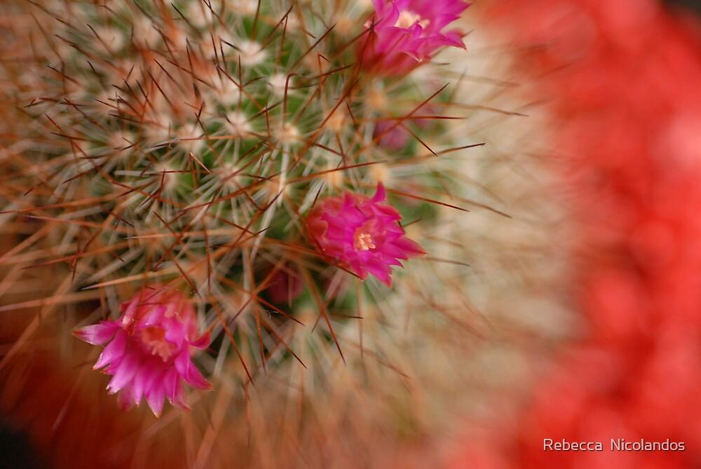 Cactus Flower by Rebecca  Nicolandos