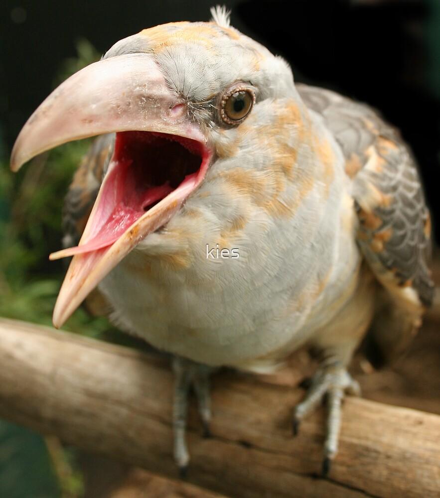A little bit Cuckoo by kies