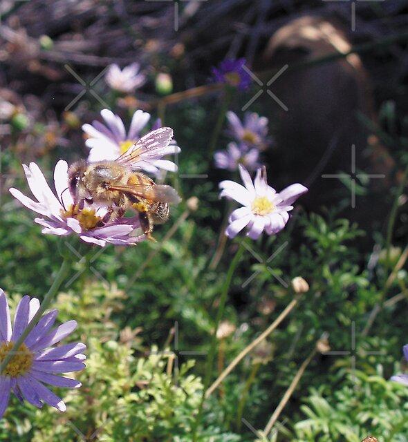 Bee Happy by georgiegirl