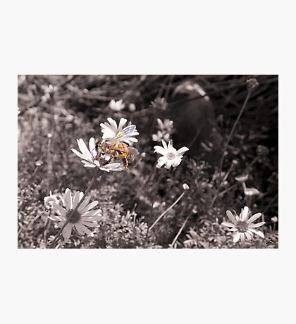 Better Bee Happy Photographic Print