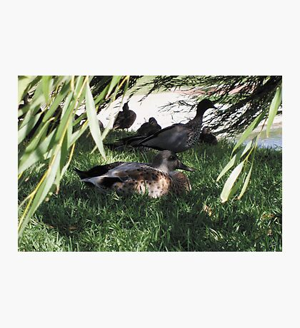 Afternoon siesta Photographic Print