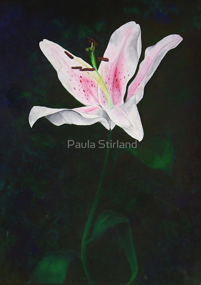 Lit up lilly by Paula Stirland
