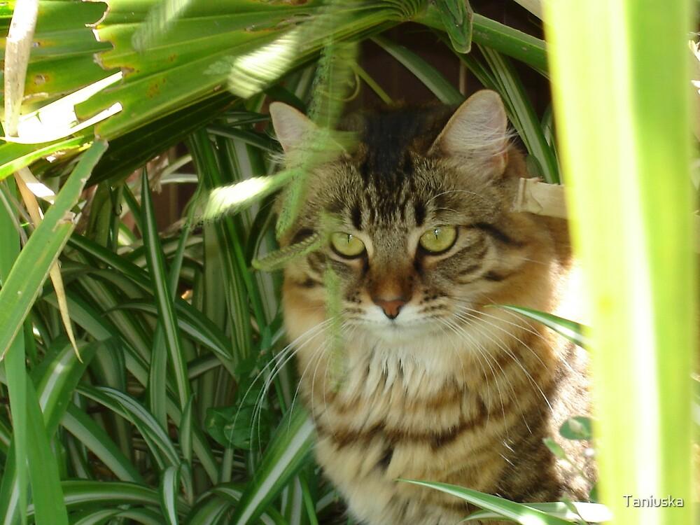 Jungle Cat by Taniuska