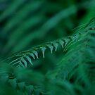Green by Jodie Noonan