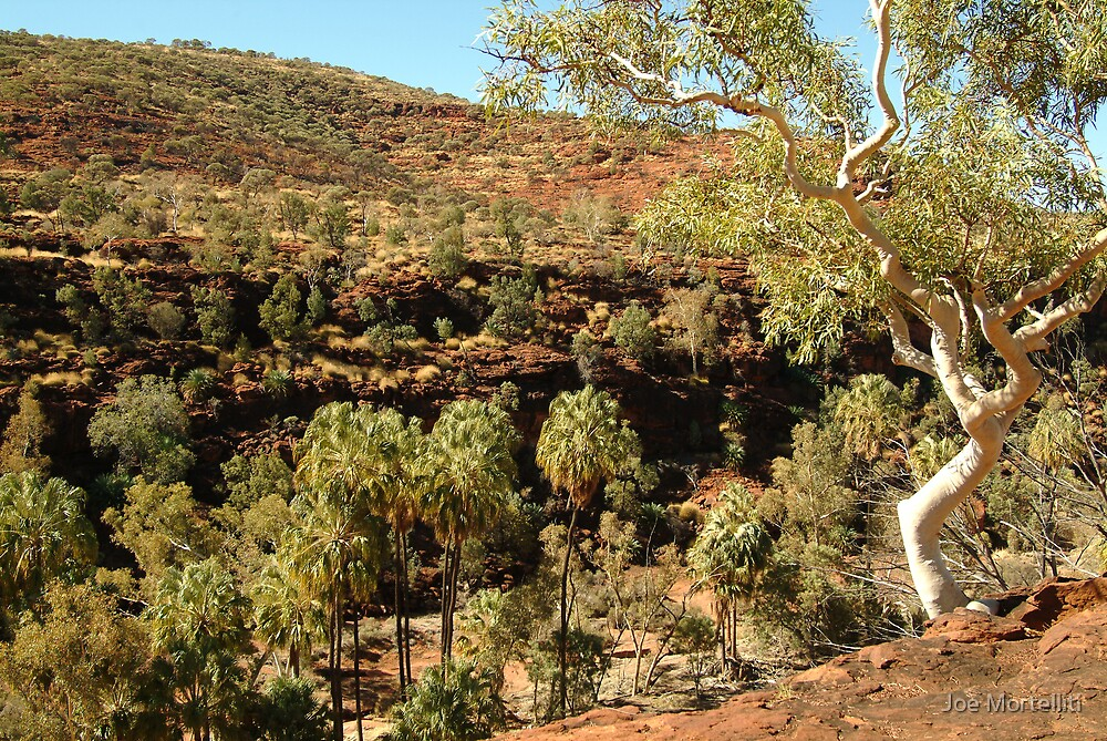 Palm Valley, West Mcdonell Ranges,NT by Joe Mortelliti