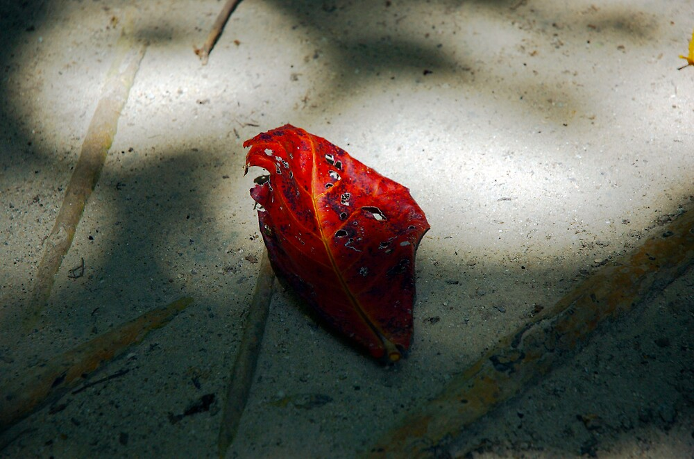 leaf by kenan
