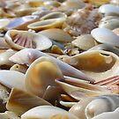 Sea Shells by the Sea Shore by Steven Zan