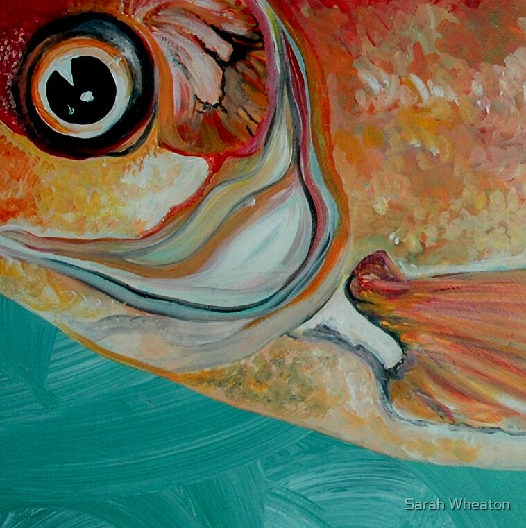 fish out of water by Sarah Wheaton